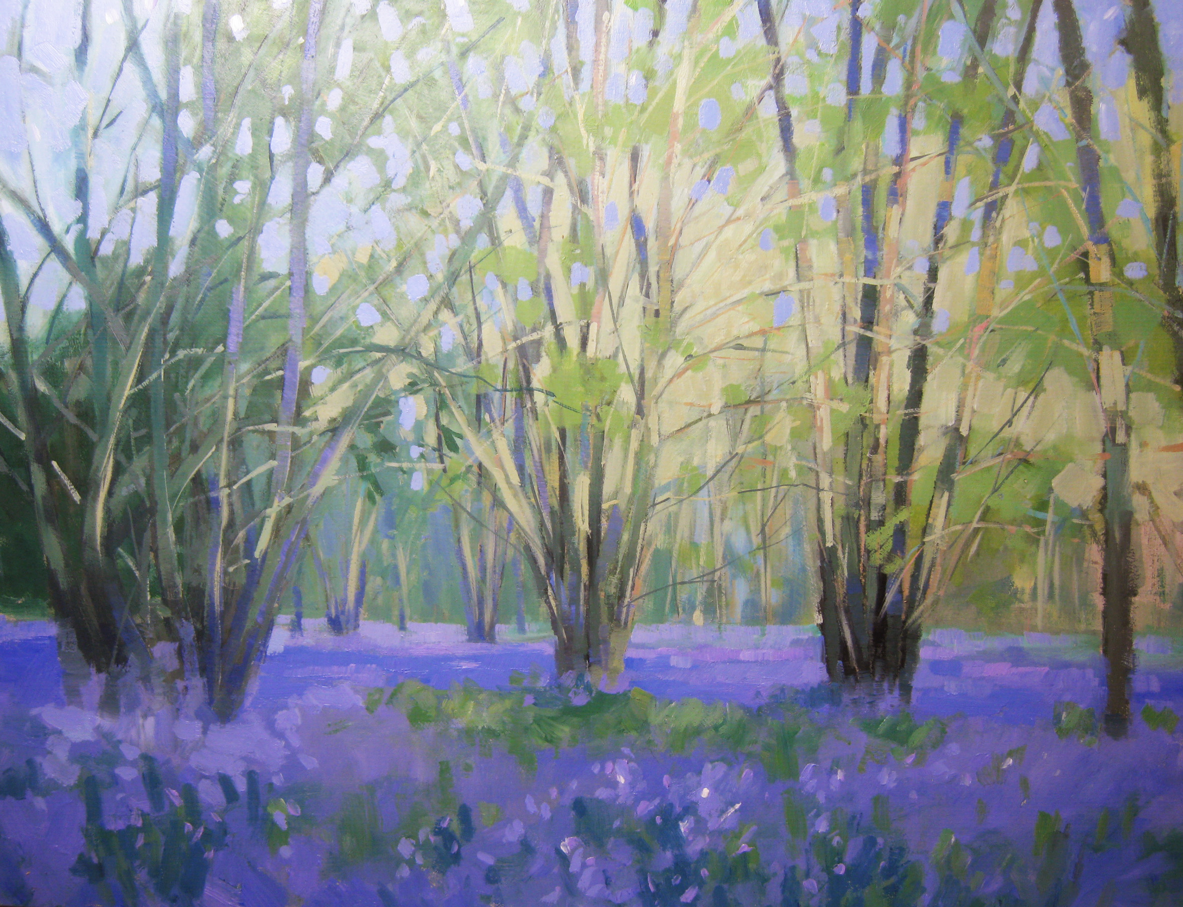Bluebells in Whichford