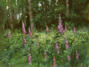 Foxgloves in the New Forest