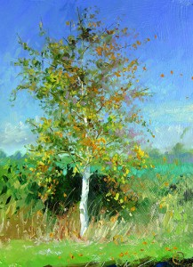 young_birch_tree