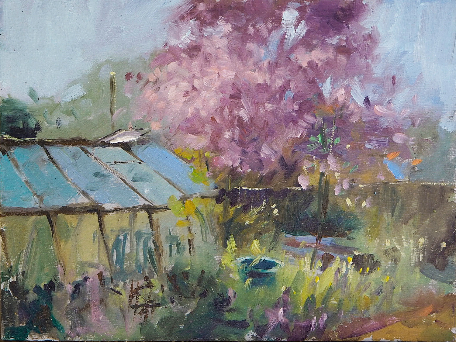 Cherry Blossom over Arnold's Greenhouse