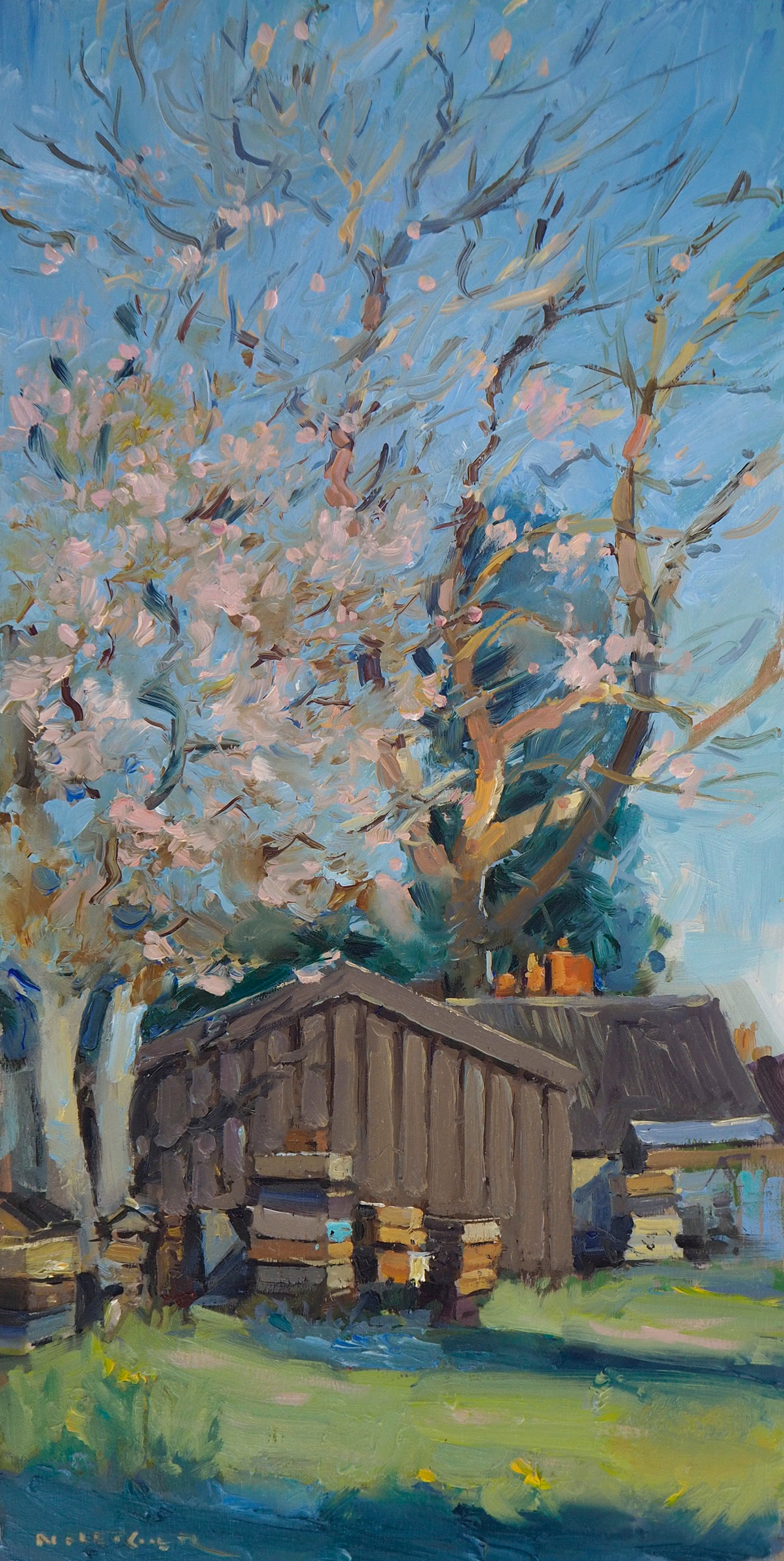 Cherry Blossom over the beehives